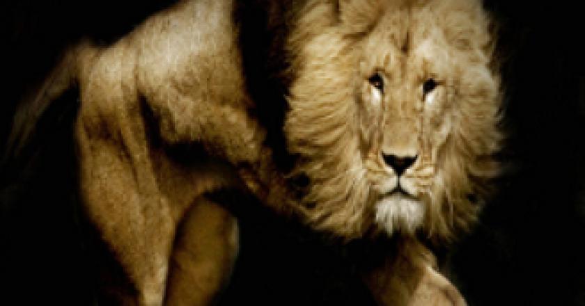 Install Lions Den On Kodi